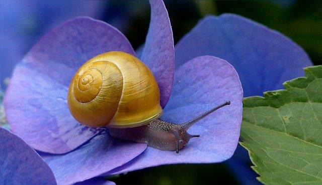 Caracol en una flor morada