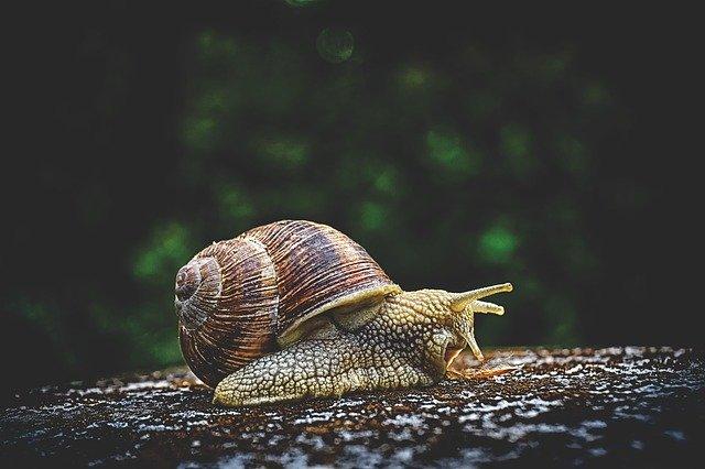 como criar caracoles en casa