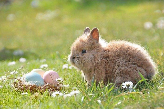 Cómo criar conejos en casa
