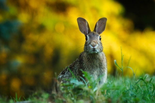 Cuidados especiales para tu conejo