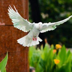 Criar palomas