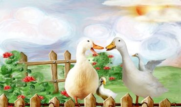 Cuidar ocas o gansos
